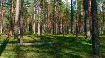 Оформление прав на лесные объекты