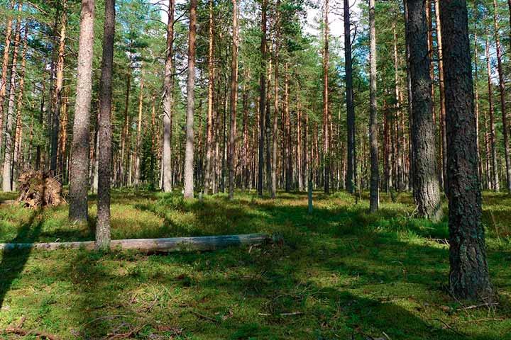 Оформление прав на лесные объекты (фото)