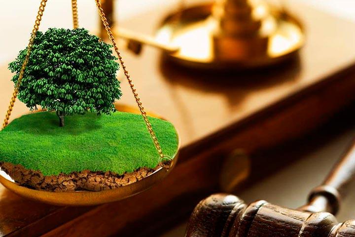 Земельно-правовые вопросы (фото)