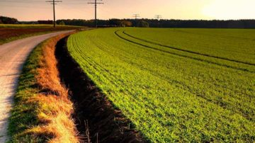 Выкуп в собственность земельных участков