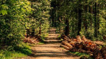 Оформление лесных участков в пользование, аренду, от формирования комплекта документов до заключения договора